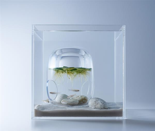 haruka-misawa-3d-printed-aquascapes-wish-fish-6